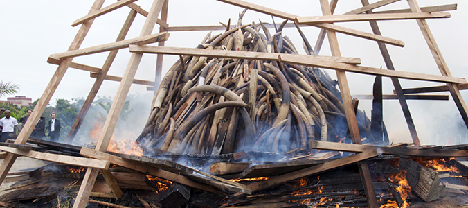 Elephant in the Room: the Illegal Ivory Trade, Wildlife and War
